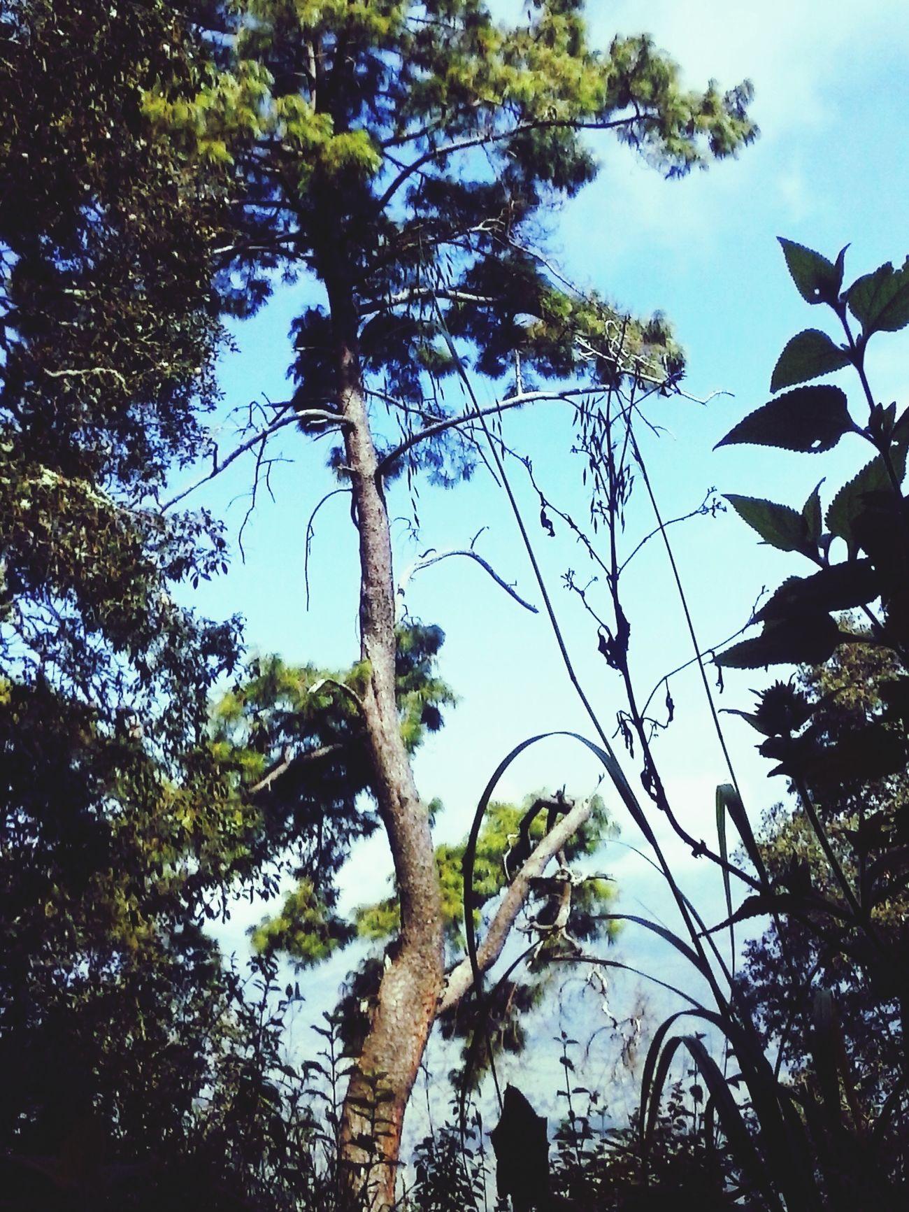 <3 Naturaleza Zacapu Michoacan mexico