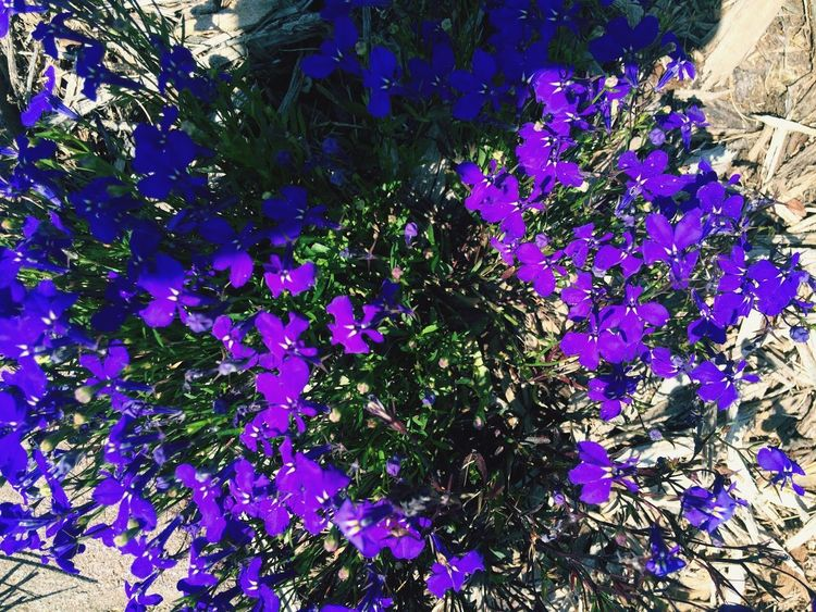 Flowers 🌺 blue and purple beautiful nature Growth Nature Flower Plant Delicate Environment Tree Tissue Beauty In Nature No People Outdoors Fragility Branch Day Freshness Close-up EyeEm Best Shots EyeEmNewHere Eye4photography