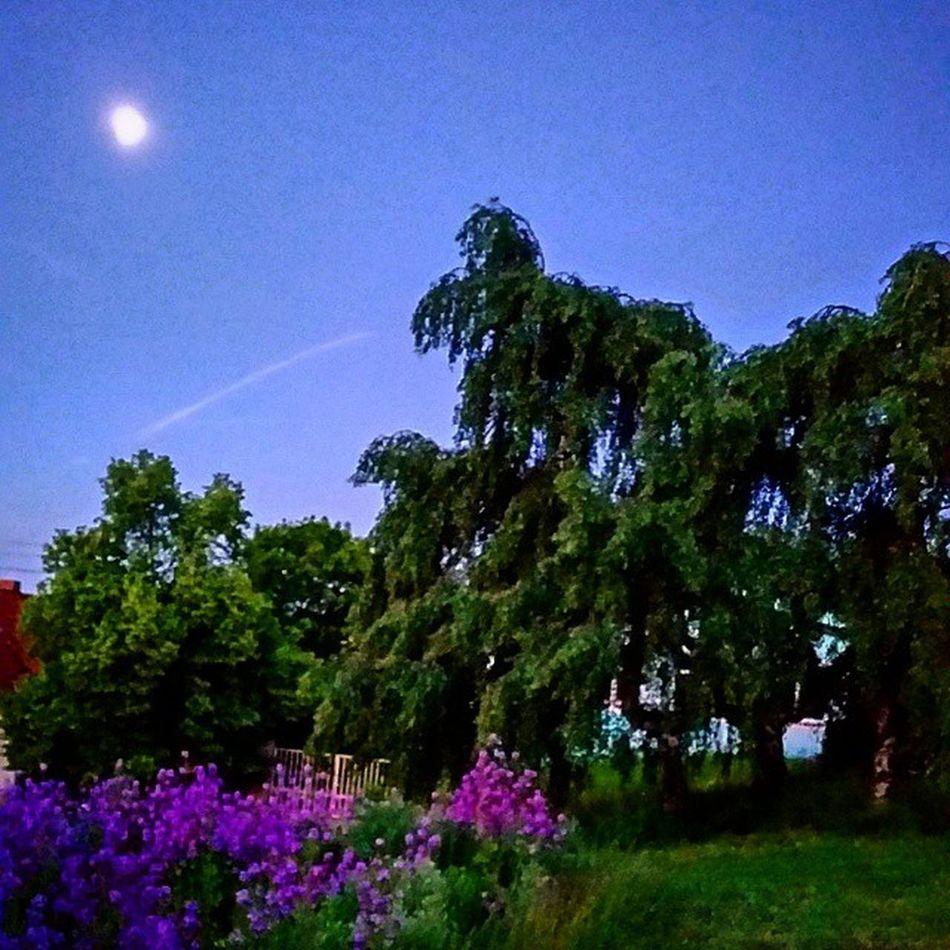 Naturfoto Morgen Naturelovers Fotototal SaarlandDeutschlandFriedrichsthalNaturBLUMENWieseflowerflowerpowerBaum