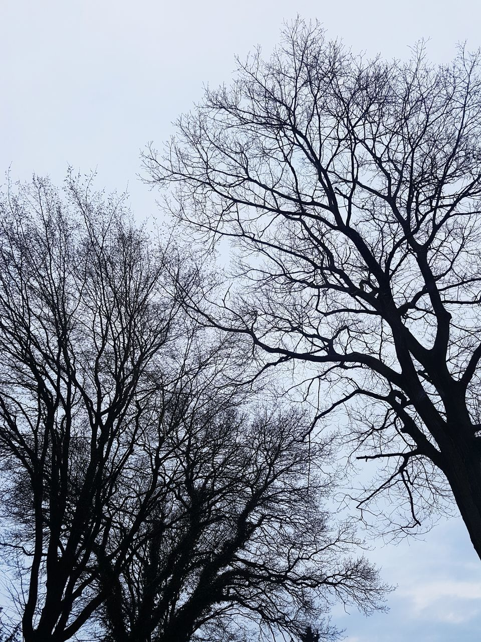tree, low angle view, bare tree, branch, nature, beauty in nature, sky, no people, day, outdoors, tranquility, clear sky, growth, scenics