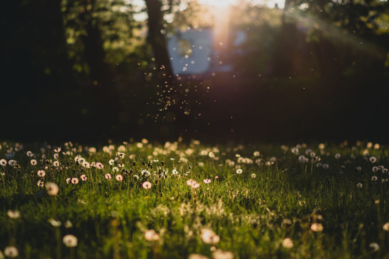 Defocused Image Of Flowers On Field