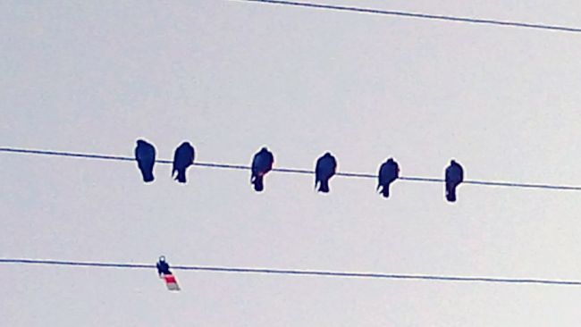 Crows On A Line Cloudy Skies Seaside, Oregon Six In A Row