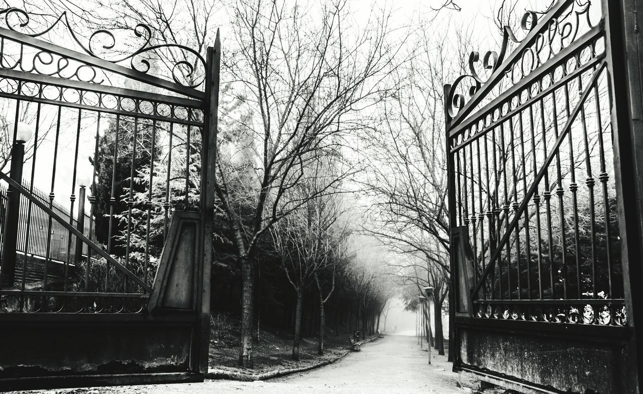 Doors Pathway Path Path In Nature Iron - Metal Iron Trees Ligth And Shadow Branches Sky Landscape_photography Landscape Lansdcape_collection Photo Photography Depth Of Field Fear Fog Dark Uncertain Winter Wintertime Blackandwhite Black & White
