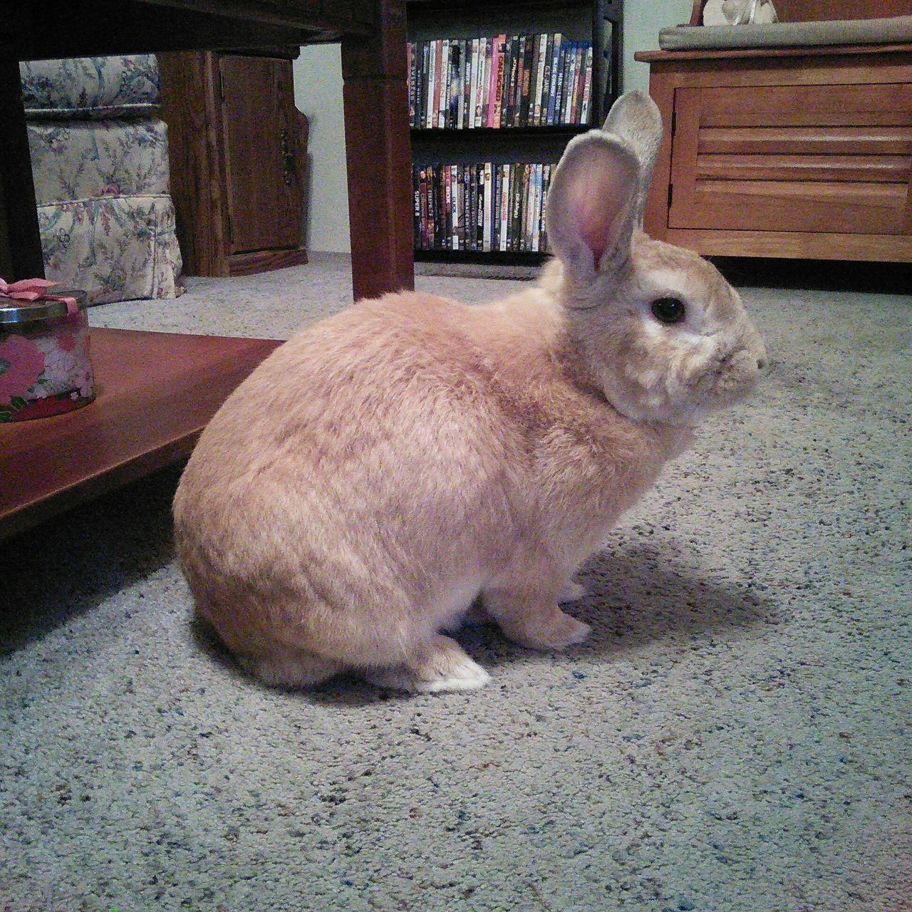 Rabbits 🐇 Rabbit ❤️ Rabbit Rabbit 🐇 Bunny  Bunny! Bunnys