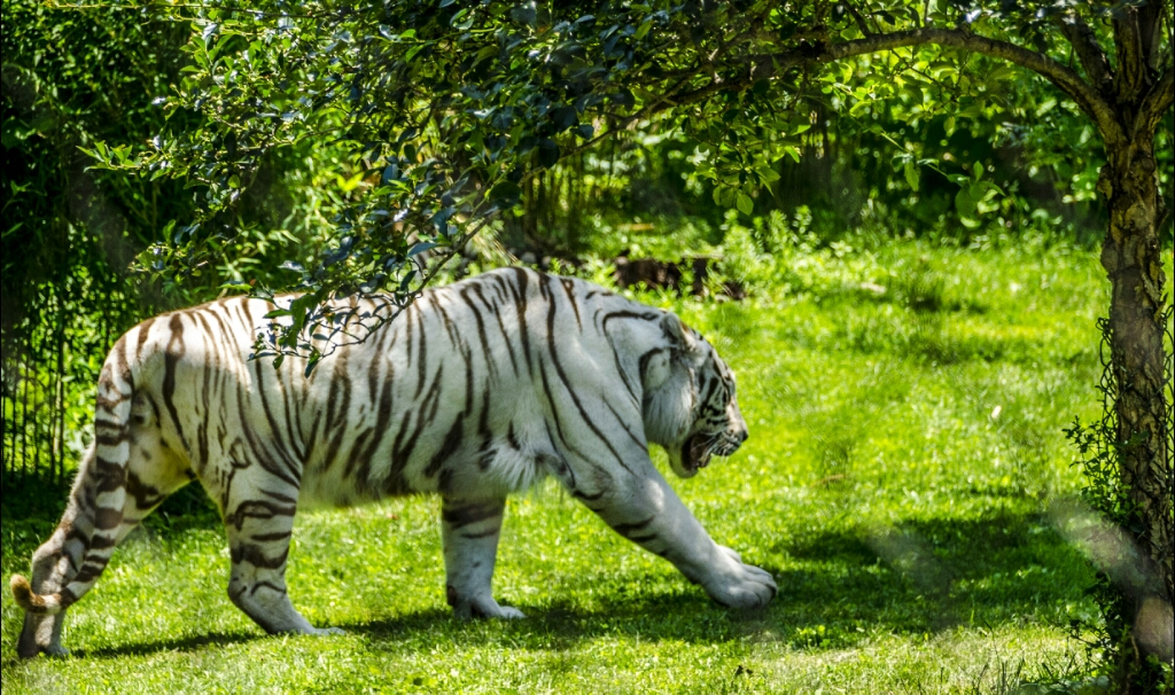 grass, animal themes, green color, field, mammal, sculpture, grassy, tree, statue, art and craft, art, one animal, safari animals, animals in the wild, wildlife, nature, creativity, full length, no people, elephant