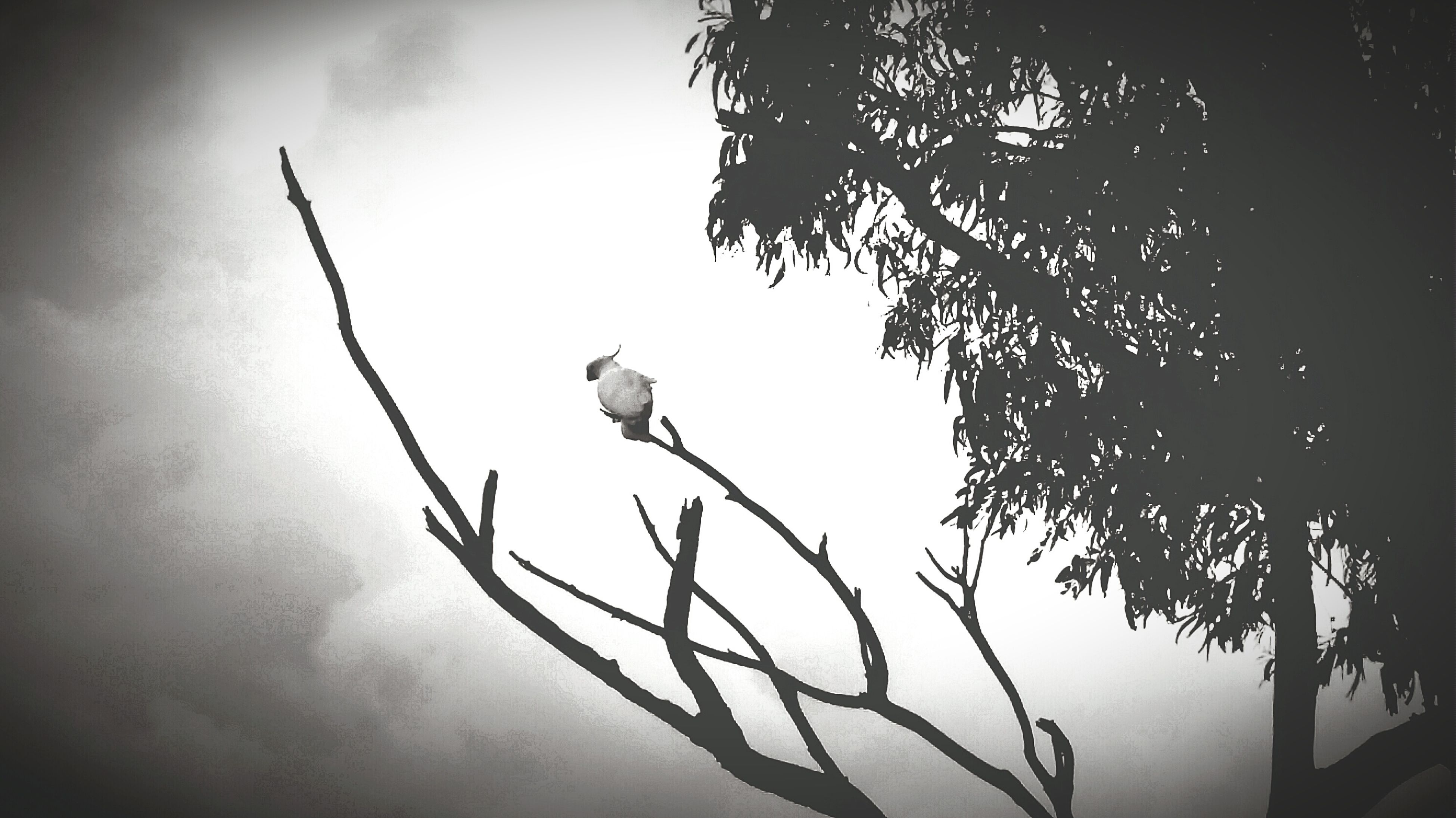 Spending some time with Nan and the White cockatoos. Paying My Respects Black And White