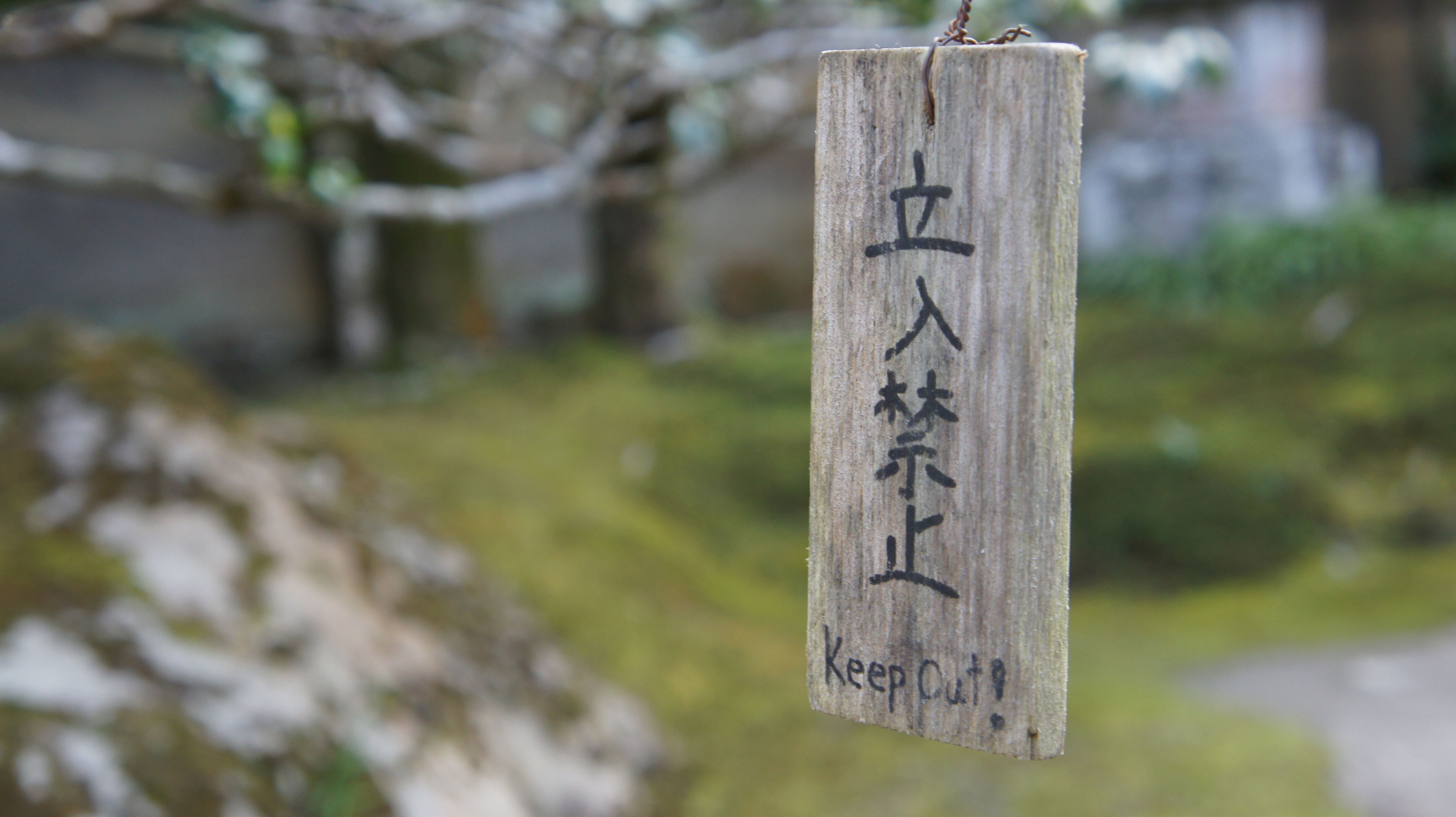 wood - material, focus on foreground, no people, nature, close-up, outdoors, day, tree