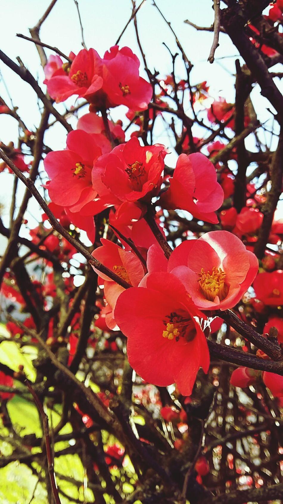 Flowers, Nature And Beauty Flowersinyourhair Taking Photos Flora