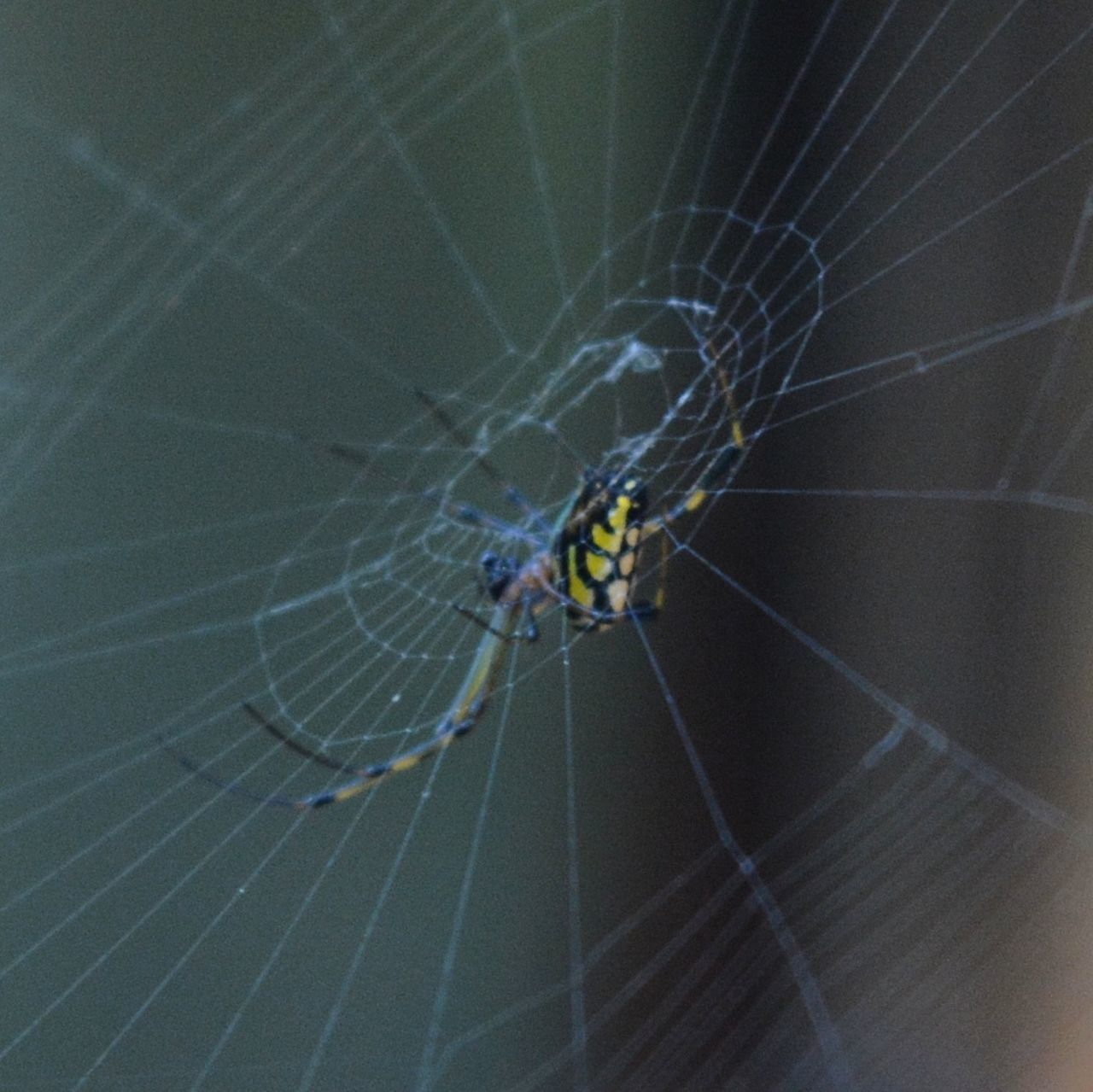 spider web, spider, web, animal themes, one animal, animals in the wild, insect, survival, nature, close-up, focus on foreground, animal leg, no people, day, fragility, outdoors, animal wildlife, beauty in nature
