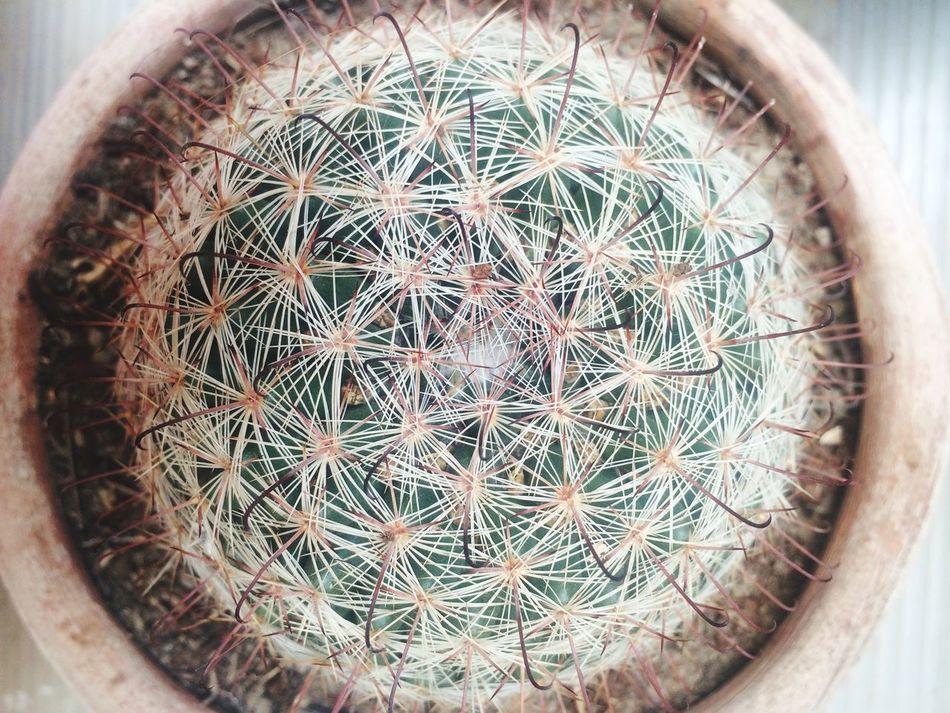 Jalisco Mexico Cactus Green Live Vianeycarre Plant