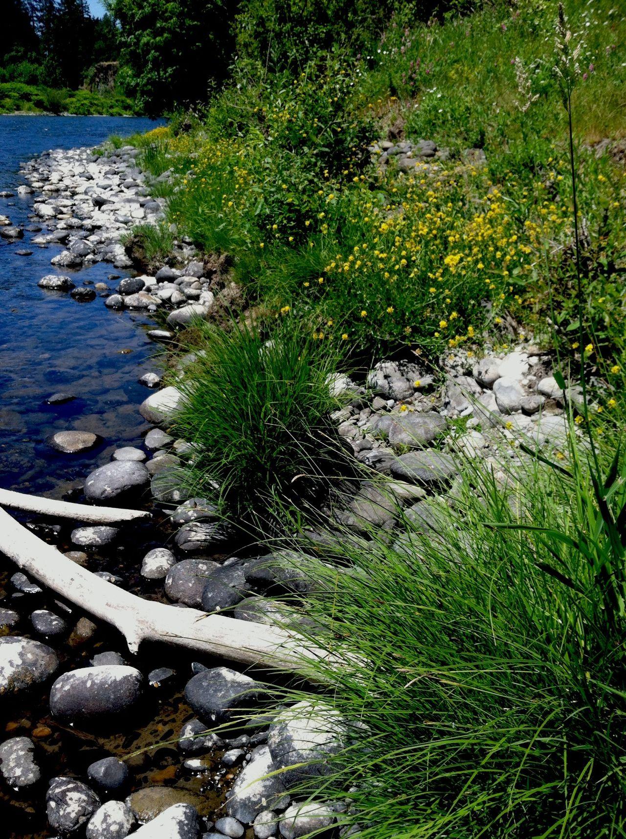 Oregon Clackamas River Wet And Wild