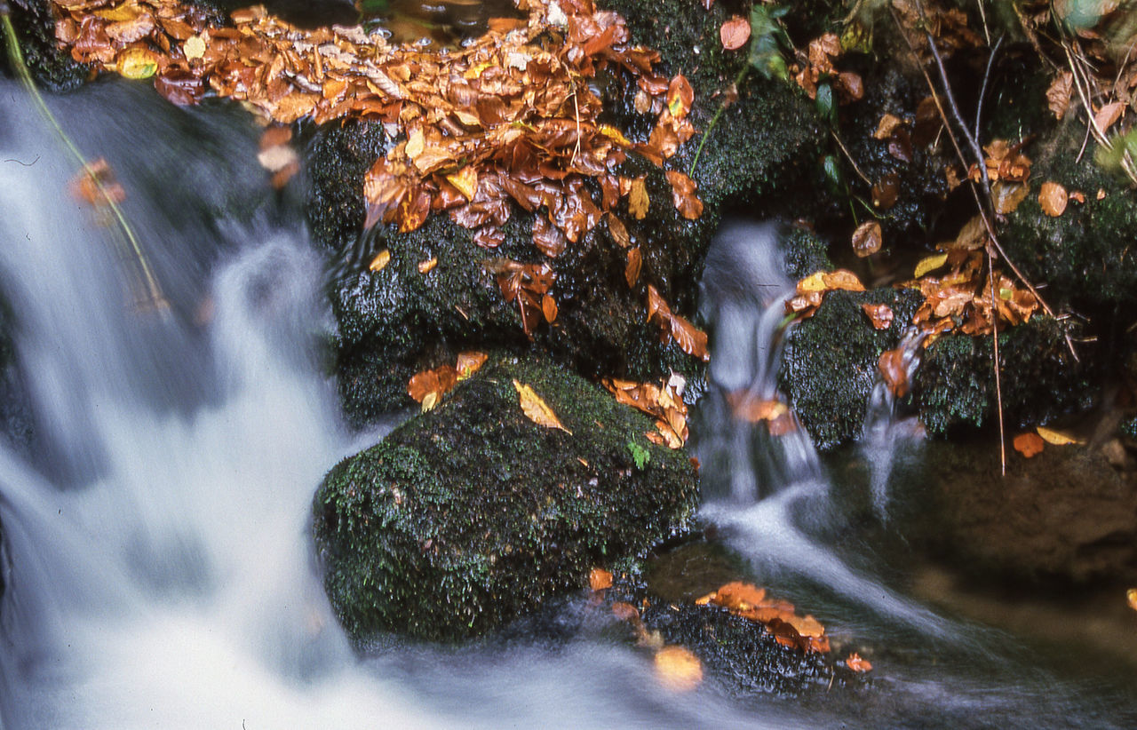 long exposure, motion, blurred motion, water, nature, waterfall, beauty in nature, tree, no people, forest, outdoors, day, scenics, leaf, freshness