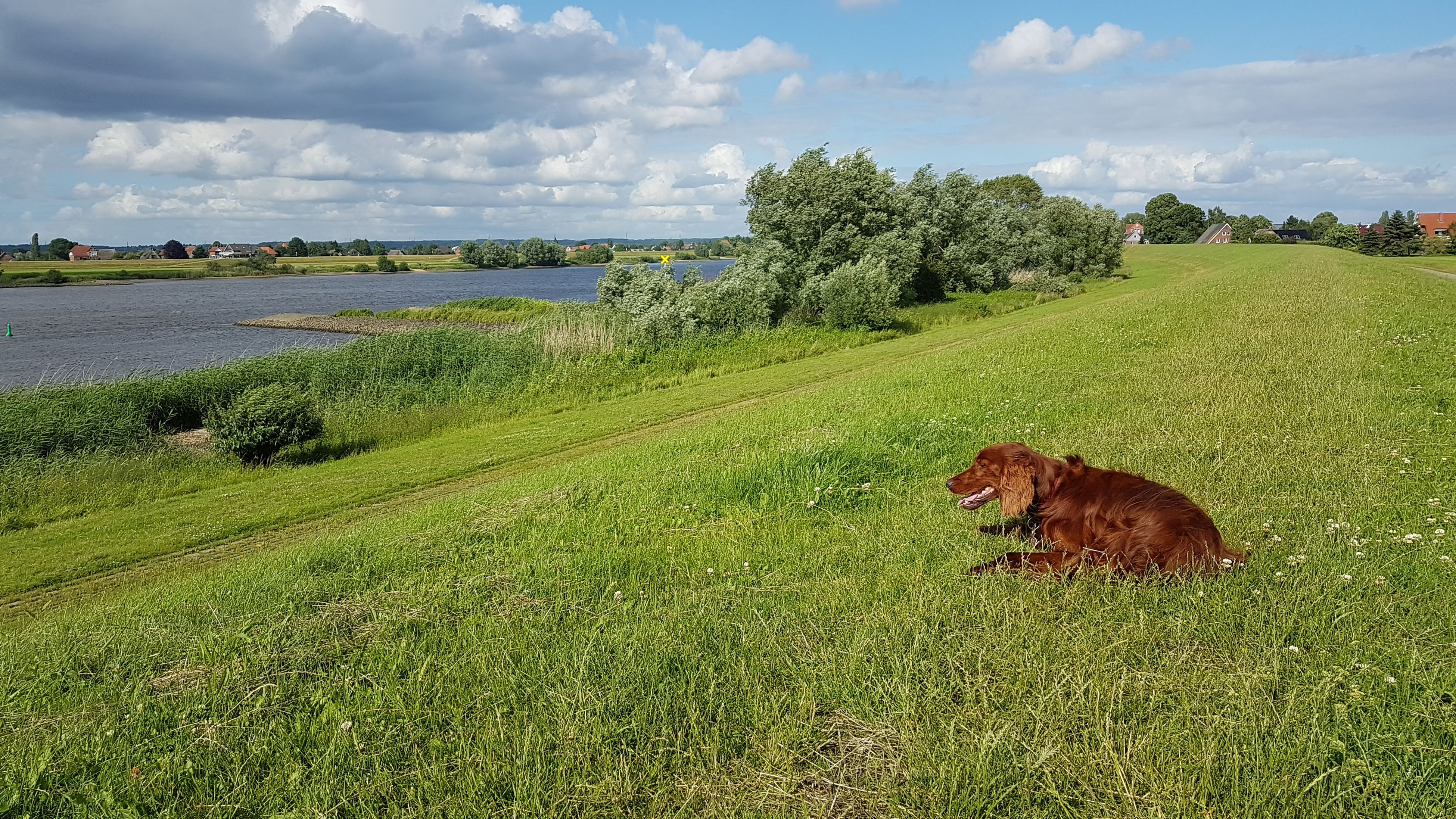 grass, sky, animal themes, mammal, cloud - sky, landscape, green color, field, nature, day, one animal, no people, tree, tranquil scene, outdoors, scenics, animals in the wild, relaxation, beauty in nature, domestic animals, highland cattle