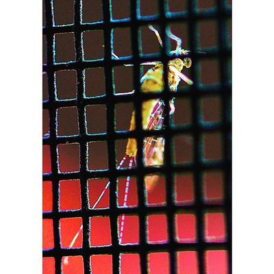 Bugslife Nature Insect Exposure Outdoor Flowerstalking Capture Fotographia NatureIsBeautiful Nature Flowers Summer Nature Details Macro Macroworld_tr Macro_freaks Macrophotography Bugs_are_us_ Instanature Macroclique Picture Wildlife