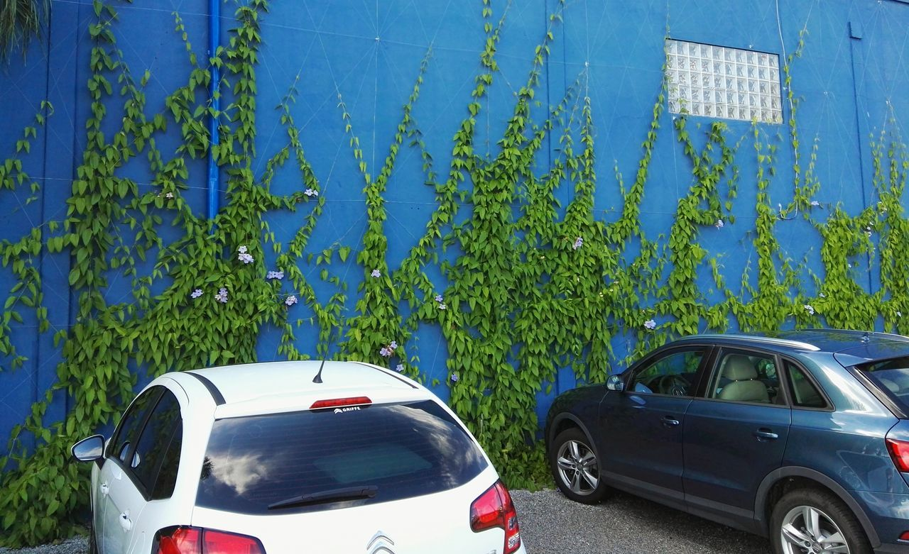 car, transportation, land vehicle, blue, day, mode of transport, outdoors, plant, stationary, no people, growth, nature, tree, sky