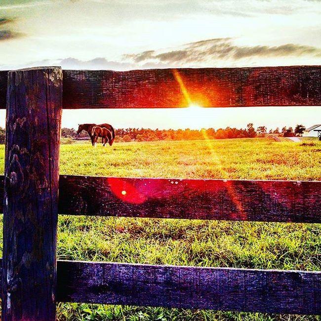 Sunset on RamseyFarm Sunset Selfie Farms Thoroghbredracing Thoroughbred Horsefarm