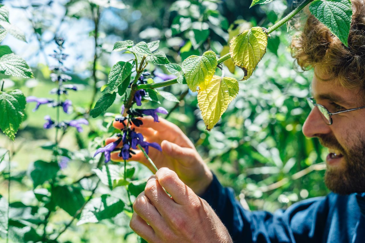 Holding Fruit Learning Curiosity Botany Flower Nature Garden Day Adult One Man Only People Plant Outdoors Nature Growth Adults Only Leaf Agriculture Working Human Body Part Tree Rural Poetry