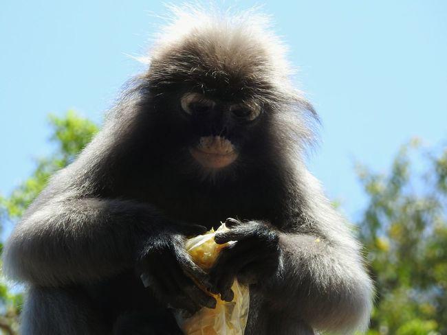 Ao Manao Thailand Let's Go. Together. Naturephotography Monkeys Magic Place ☀️ The Gulf Of Siam Sunny Day 🌞 Wild Animal Beachphotography EyeEm Selects Prachuap Khiri Khan PrachuapKhiriKhan EyeEmNewHere Sommergefühle Happy Summer Real Thailand Nature