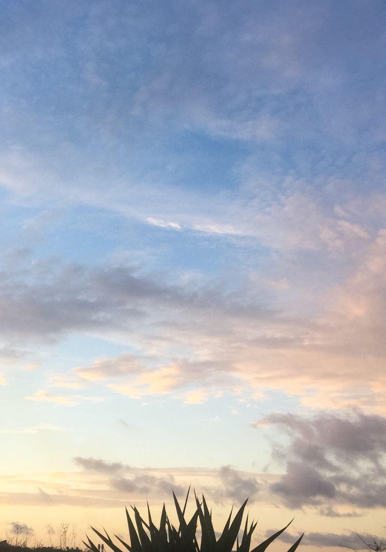Spikey Bush Sky Sunset