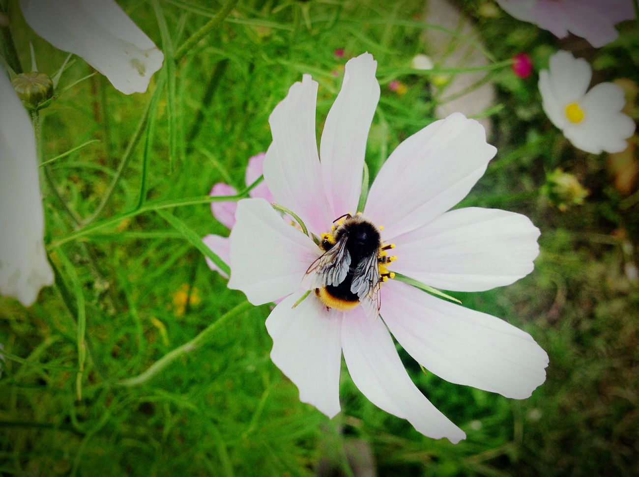 Taking Photos Amazing Nature Sunny Day Summer Flowers Nature Bee