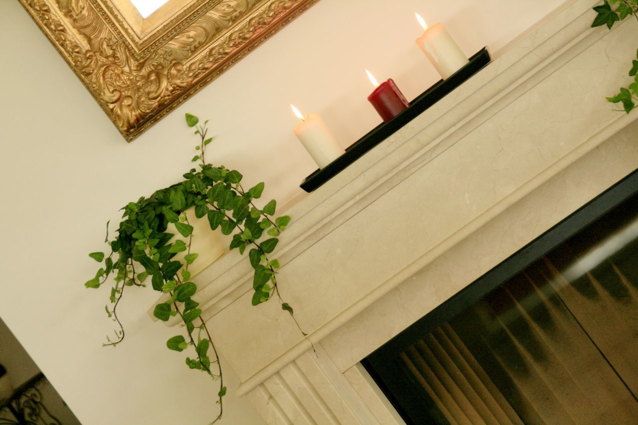 indoors, no people, home interior, leaf, plant, low angle view, architecture, freshness, day, close-up