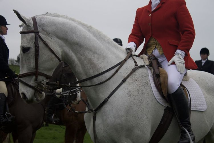 Bridle Horse Hunting Party Leisure Activity Mammal Outdoors Red Jacket The Great Outdoors - 2016 EyeEm Awards The Hunt White