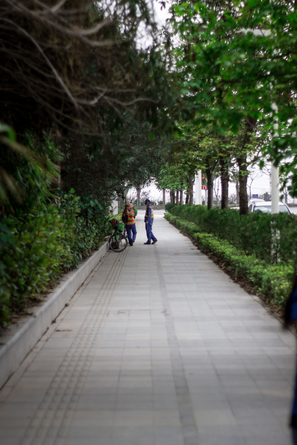 Break Time China Day Depth Of Field Full Length Nature Outdoors People Perspective Real People Side View The Way Forward Tree Two People Walking Workers Zhuhai