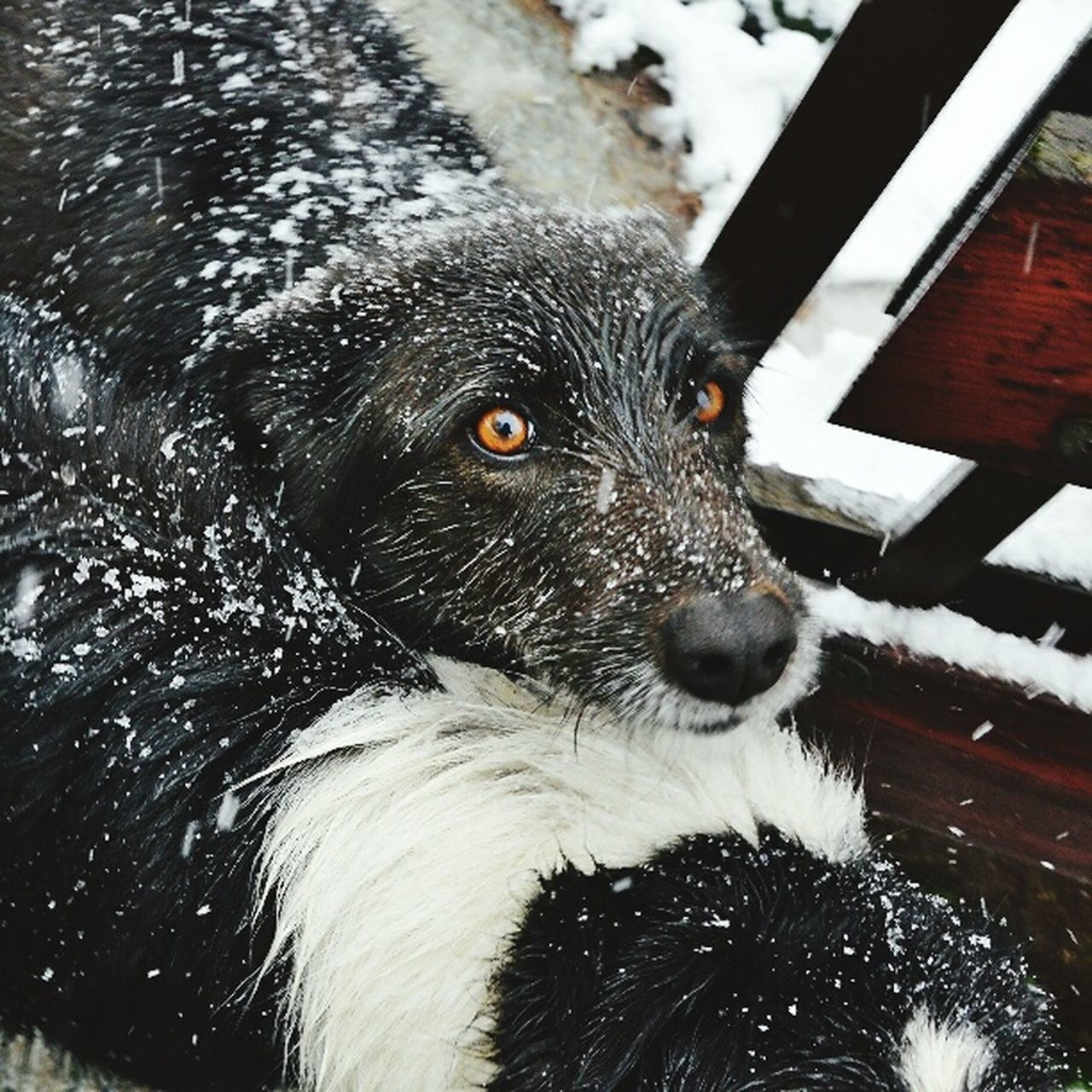 Dogslife Dog Snow Cold Winter TBT  Snowing Day Pets Dogs