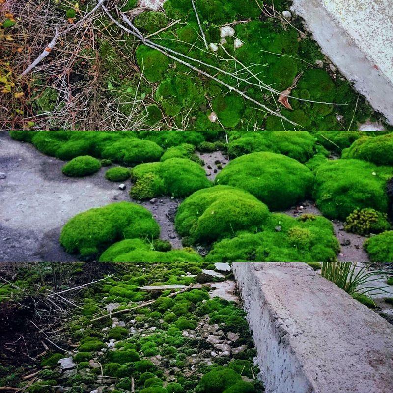 Немного чуда...💚🍀🙏🏻 чудо зелень  мир