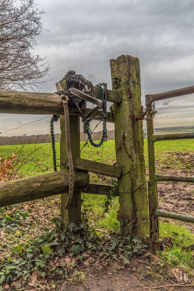Forgotten tack, abandoned gate Abandoned Broken Destruction Fence Field Grass Green Color Grey Sky Horse Riding Landscape Obsolete Railing Ruined Rural Rural Scene Tack Tree Tree Trunk Wood Wood - Material Wooden