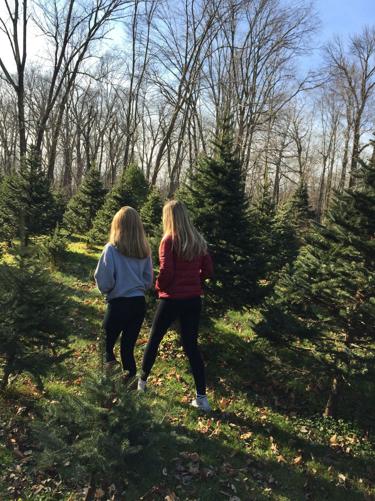 Sisters! Two People Togetherness Full Length Blond Hair Mid Adult Women Mother Sisters Rear View Leisure Activity Walking Women Tree People Family Outdoors Bonding Unity Nature Trees Pines EyeEmNewHere