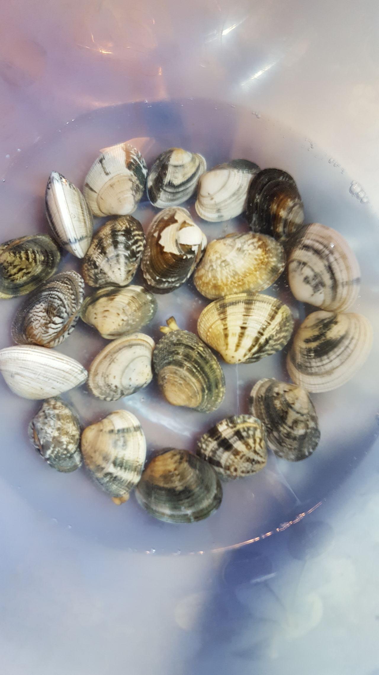 Seashell No People Nature Close-up Healthy Eating Sea Life Indoors  Day Freshness Vongole Food♡ Italia Napoli Napoli ❤ Italy🇮🇹 Freshness