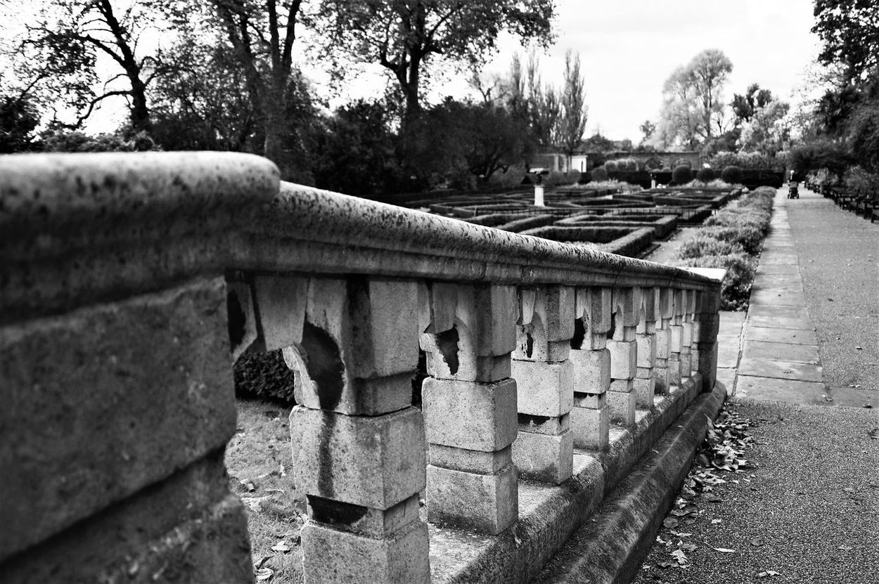Blackandwhite Black And White Black & White Blackandwhite Photography Beauty In Nature Hollandpark Holland Park, London Londonphotography Londonparks London London_only Londonthroughmycam Londonlife Close-up Close Up Photography Autumn Autumn Collection Autumn Leaves Autumnbeauty The Street Photographer - 2017 EyeEm Awards Lost In The Landscape