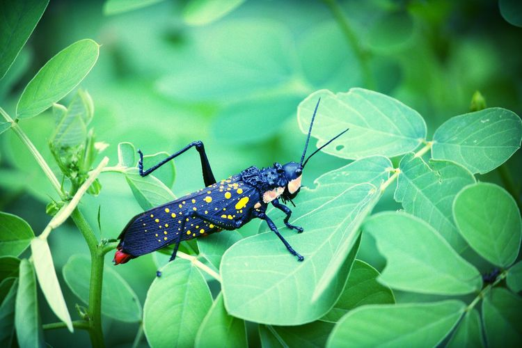 Eyem Masterclass People Nature Taking Photos Photography First Eyeem Photo Canon1200d Canon_official Canonphotography Wildlife Wildlife Photography Macro Macro_collection Nature_collection EyeEm Best Shots EyeEm Nature Lover Macro Beauty Insect Photography Grasshopper Colour Of Life