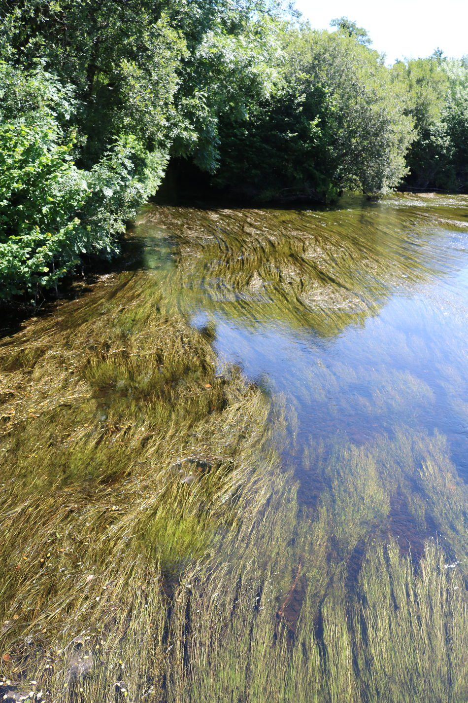 Beauty In Nature Day Flowing Water Grass Growth Ireland Landscape Macroom Nature No People Outdoors River Lee Scenics Sky Summer Tranquil Scene Tranquility Tree Water Weed
