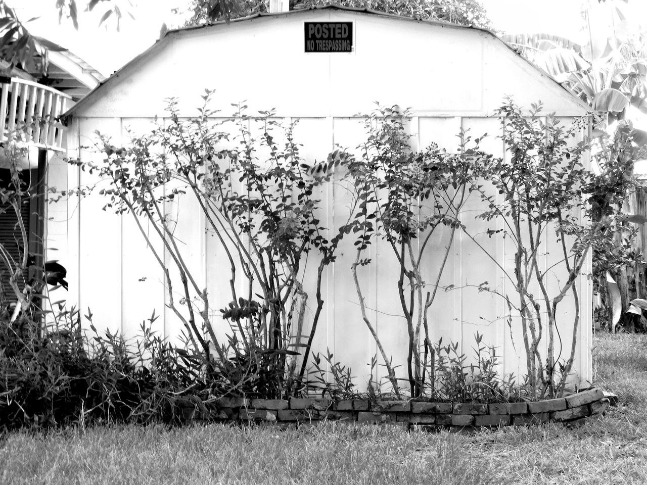 Monochrome Photography Outdoors Nature Florida Untold Stories Darkness And Light Remote Random Acts Of Photography Blackandwhite Florida Nature Floridaphotographer Beauty In Nature Built Structure Noir Et Blanc Notes From The Underground No Trespassing Light And Shadow Growth