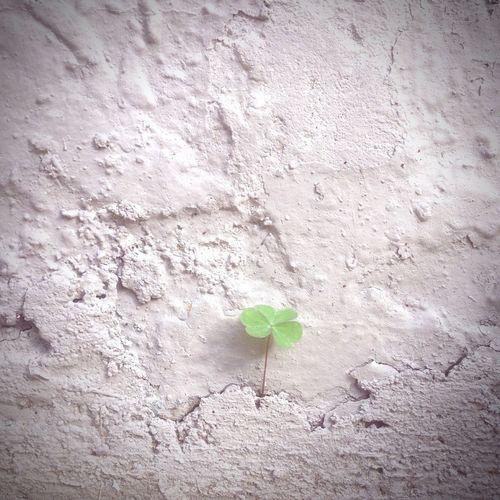 Trebol Green Verde Gray Gris