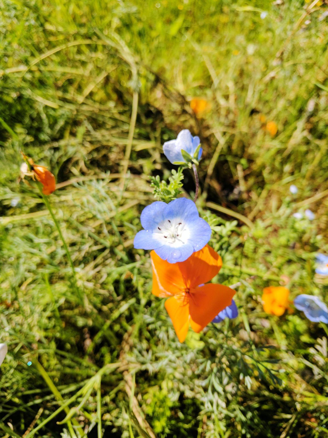 EyeEmFlower EyeEm Nature Lover Botanical Flowerporn Botany Flower Head First Eyeem Photo