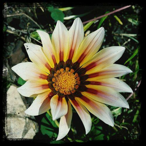 Flower's ...