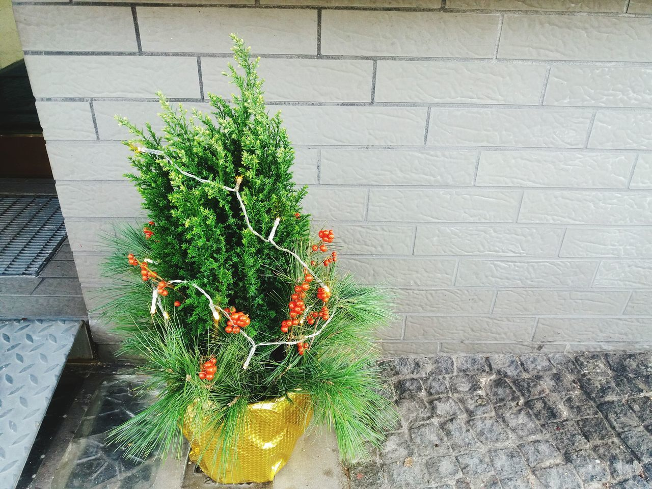 A miniature christmas tree Plant No People Green Color Day Nature Freshness Outdoors Xmas Xmaslights Xmas Decorations Xmastree Xmas🎄 Xmas Tree Christmas Tree Christmas Decorations Christmas Lights Christmas Time Green Color Close-up
