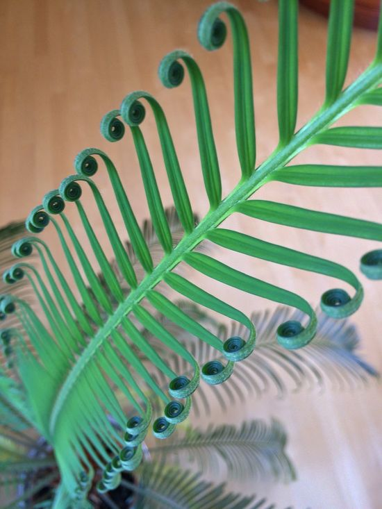 Close-up Detail Fern Focus On Foreground Green Color Koru New Zealand No People Repetition Selective Focus