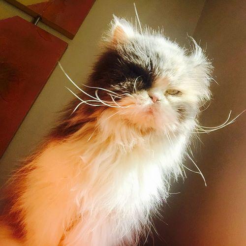 Brazil Lovecats❤️ Brasil ♥ Hello World I Love My Cat Cat Cat♡ I Love My Cats  Cats Hi!