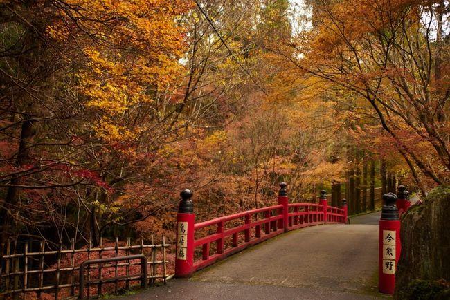 Imakumano Maple Maple Leaf Autumn Autumn Colors Autumn Leaves Bridge Japan