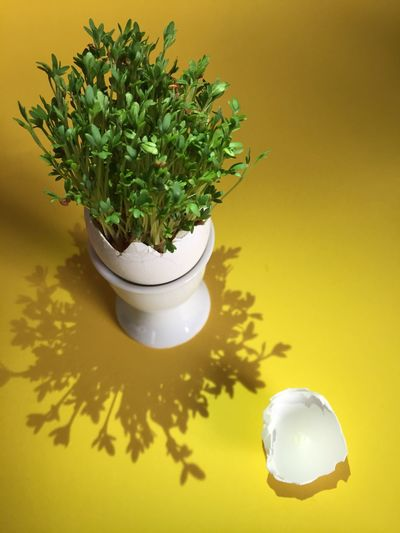 Plant Growth Close-up Freshness Easter Eggs Easter Ready Cress Eggshell Season  Yellow Green Color No People Green