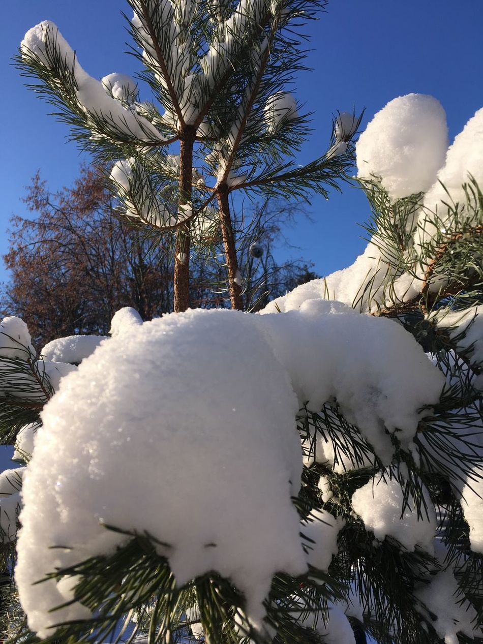 Russia Tree Nature No People Outdoors Day Sky Beauty In Nature Cold Temperature Biutiful Winter Mobile Photography Enjoy Travel Tourism Wether Snow My Hobby