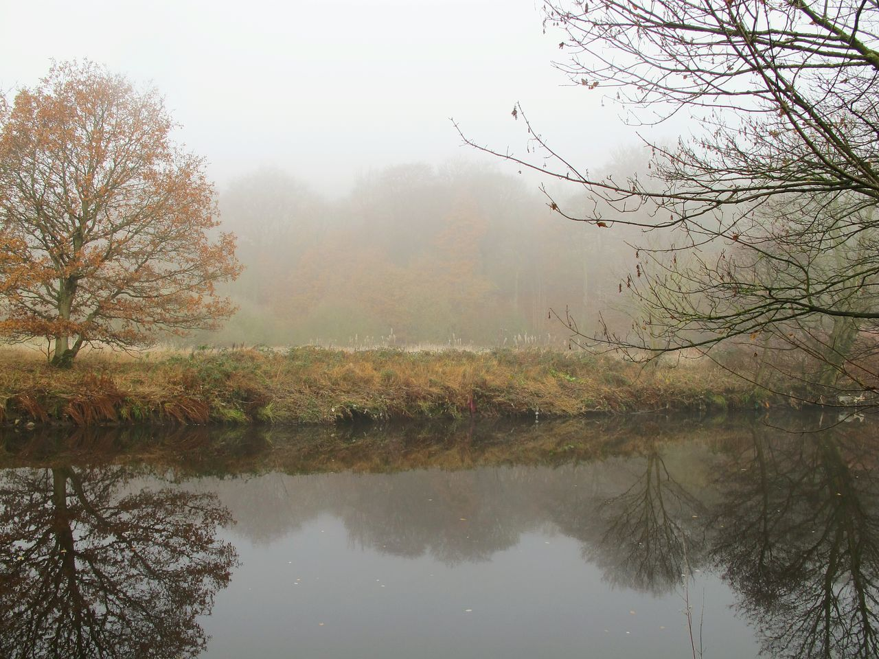 Foggymornings Frosty Days Water River Bank  Tranquil Scene Beauty In Nature Scenics Fineartphotography EyeEmbestshots Foggy Morning Autumnbeauty Autumn Leaves Cold Temperature No People Rural Scene Reed - Grass Family Reflection WoodLand Autumn Outdoors Non-urban Scene Day Fog Winter Is Coming Tranquility Nature