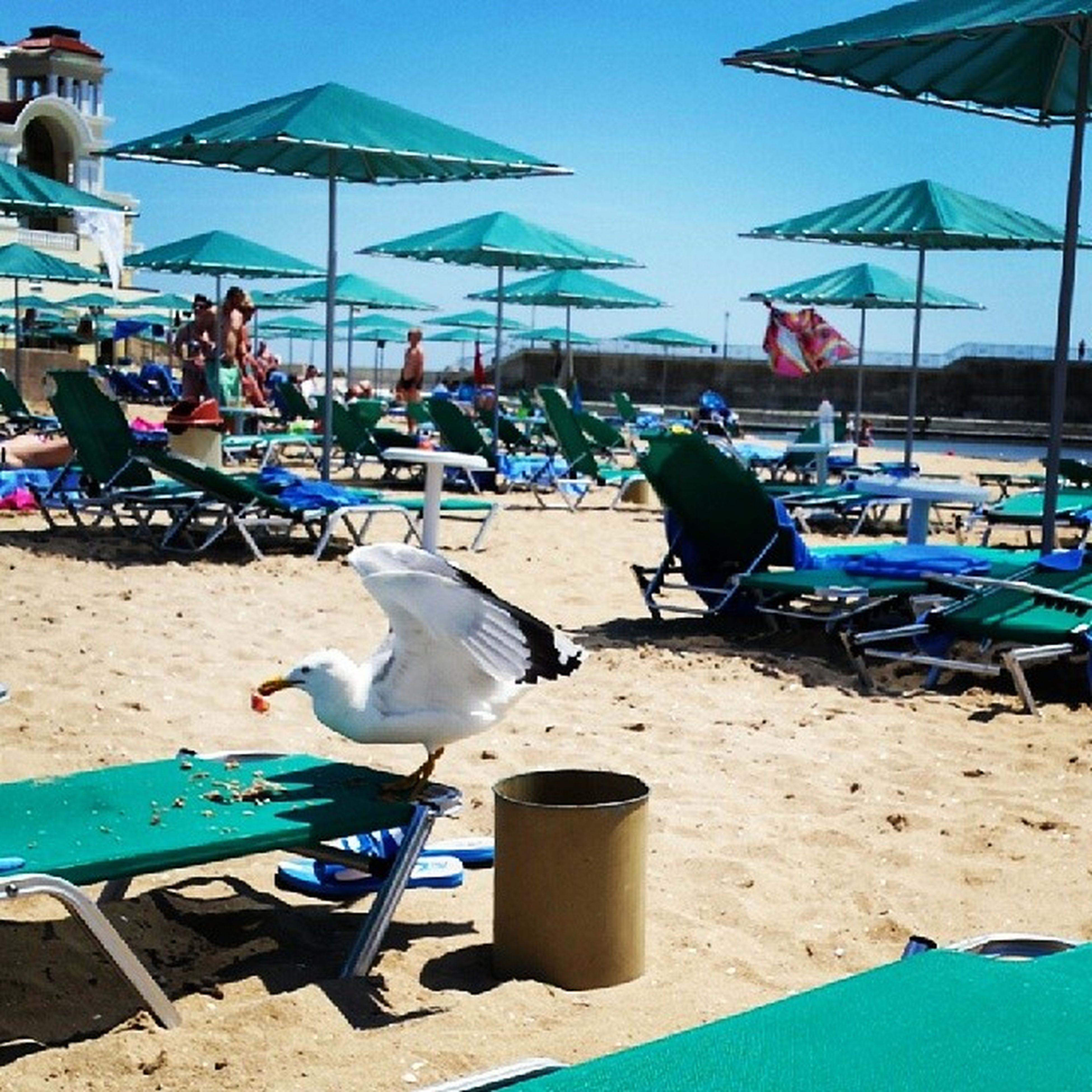 beach, sand, sea, shore, sunlight, relaxation, chair, men, blue, water, moored, lounge chair, day, person, beach umbrella, vacations, incidental people, summer, parasol