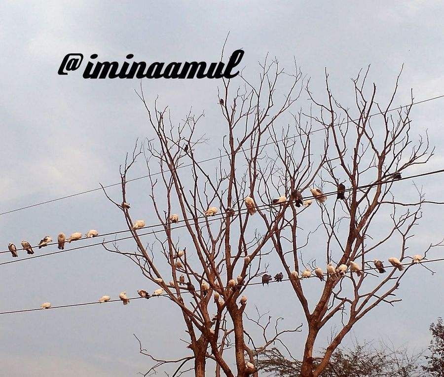 No People Sky Nature Outdoors Cloud - Sky Tree Landscape Beauty In Nature Day Bird Birds Photography LovePhotography Follow Me Photographylovers Bare Tree Beauty In Nature Animal Wildlife Followplease Follow Me I'll Follow Back Follow Me On Instagram ♥