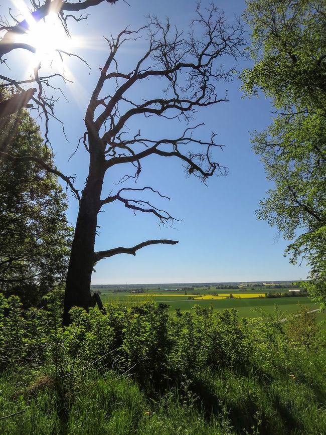 Trekking 21 km on Beautiful Eco Park Omberg today! Landscape Sunlight ☺