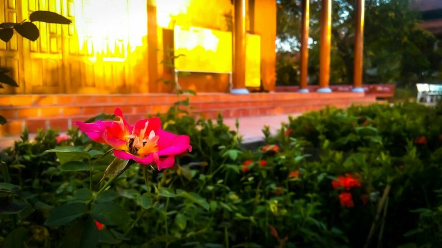 Flower Collection EyeEm Nature Lover Flower Mobile Photography